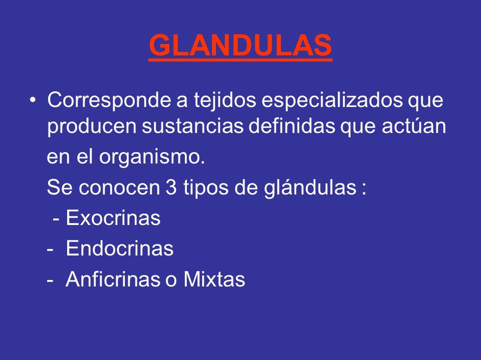 GLANDULAS Corresponde a tejidos especializados que producen sustancias definidas que actúan. en el organismo.