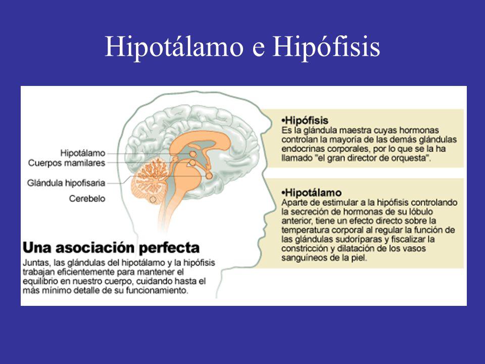 Hipotálamo e Hipófisis