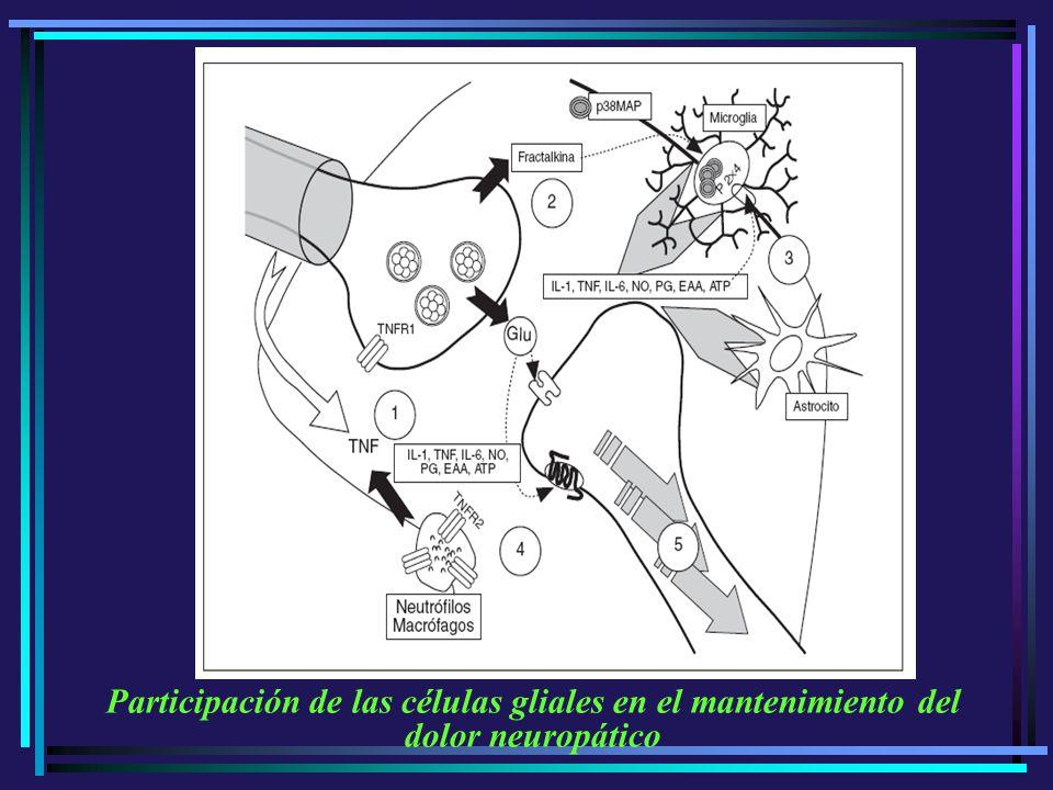 Participación de las células gliales en el mantenimiento del dolor neuropático