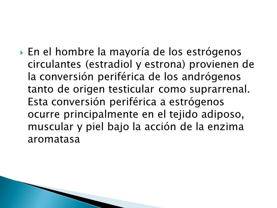 En el hombre la mayoría de los estrógenos circulantes (estradiol y estrona) provienen de la conversión periférica de los andrógenos tanto de origen testicular como suprarrenal.