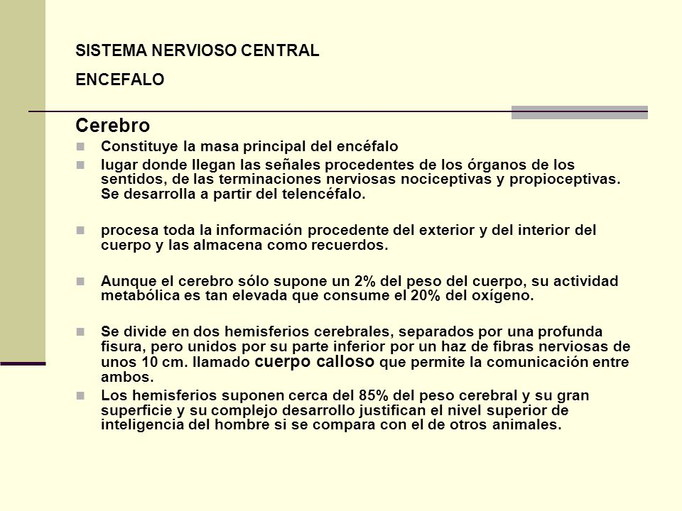 Cerebro SISTEMA NERVIOSO CENTRAL ENCEFALO