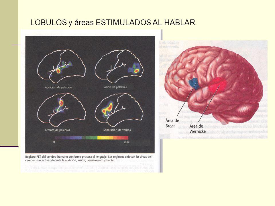 LOBULOS y áreas ESTIMULADOS AL HABLAR