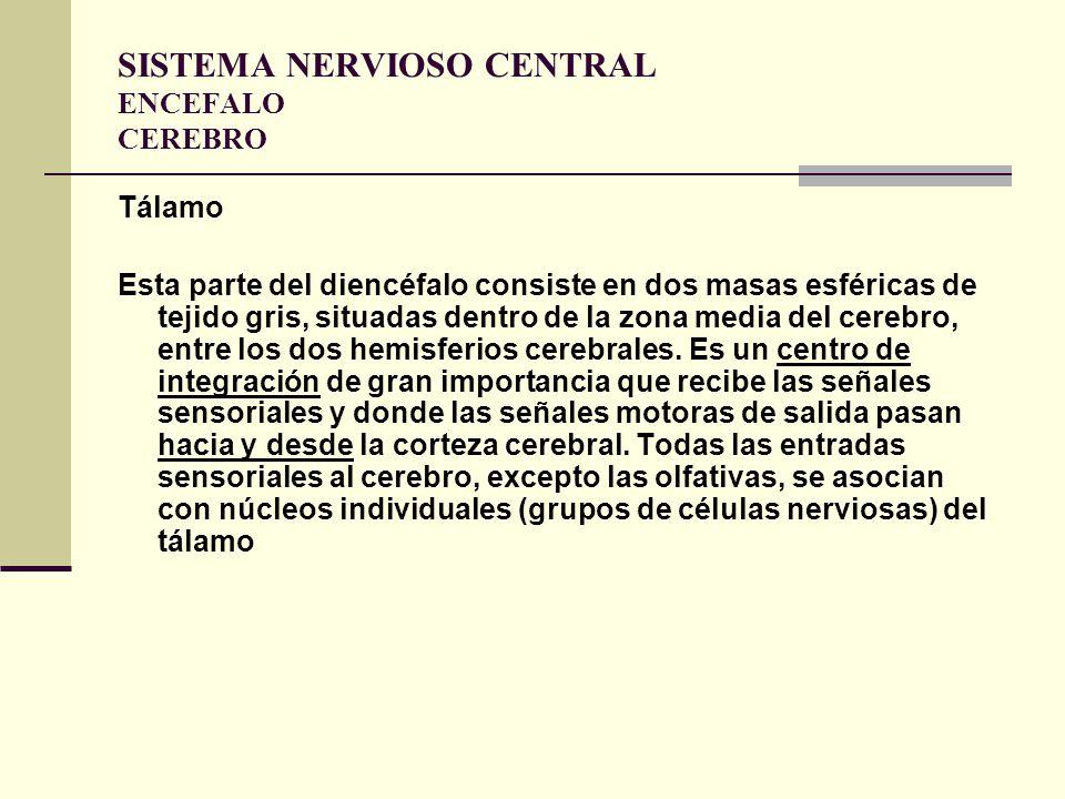 SISTEMA NERVIOSO CENTRAL ENCEFALO CEREBRO