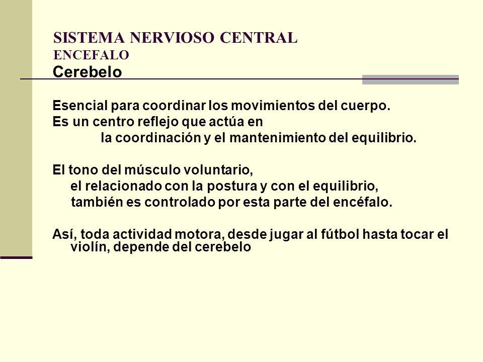 SISTEMA NERVIOSO CENTRAL ENCEFALO