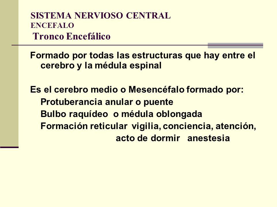 SISTEMA NERVIOSO CENTRAL ENCEFALO Tronco Encefálico
