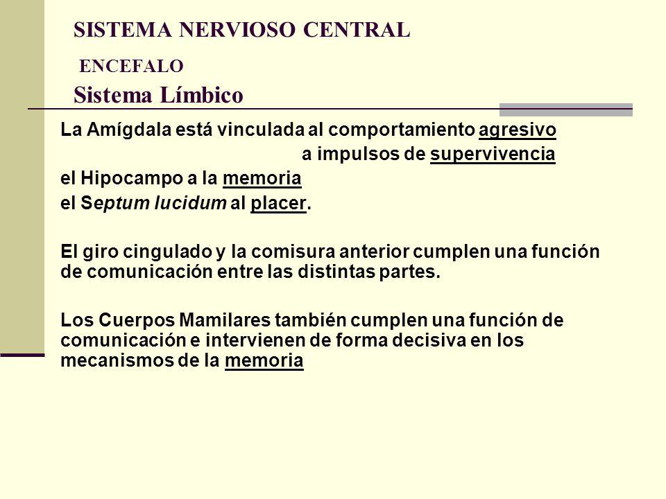 SISTEMA NERVIOSO CENTRAL ENCEFALO Sistema Límbico