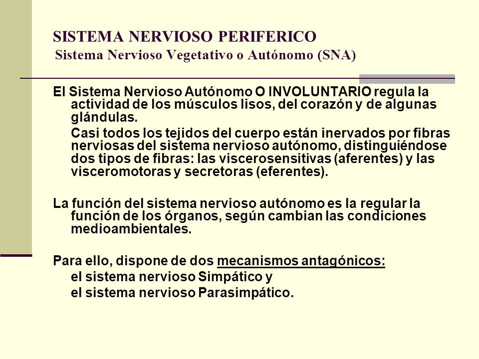 SISTEMA NERVIOSO PERIFERICO Sistema Nervioso Vegetativo o Autónomo (SNA)