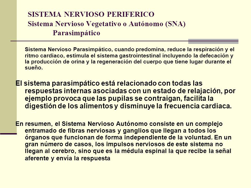 SISTEMA NERVIOSO PERIFERICO Sistema Nervioso Vegetativo o Autónomo (SNA) Parasimpático
