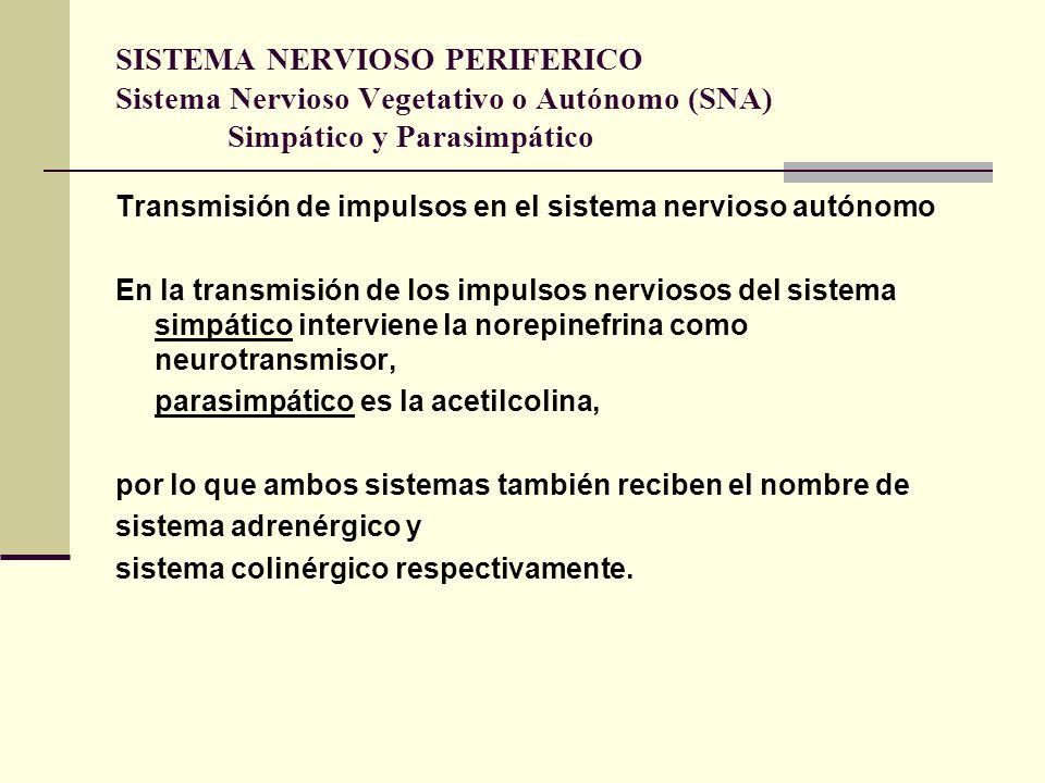 SISTEMA NERVIOSO PERIFERICO Sistema Nervioso Vegetativo o Autónomo (SNA) Simpático y Parasimpático