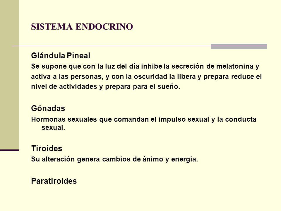 SISTEMA ENDOCRINO Glándula Pineal Gónadas Tiroides Paratiroides