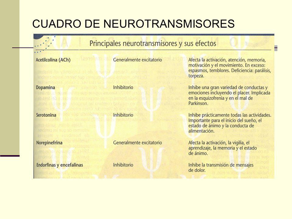 CUADRO DE NEUROTRANSMISORES