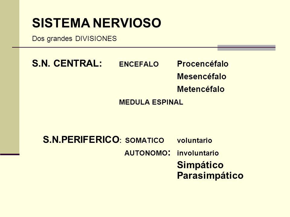 SISTEMA NERVIOSO S.N. CENTRAL: ENCEFALO Procencéfalo Mesencéfalo