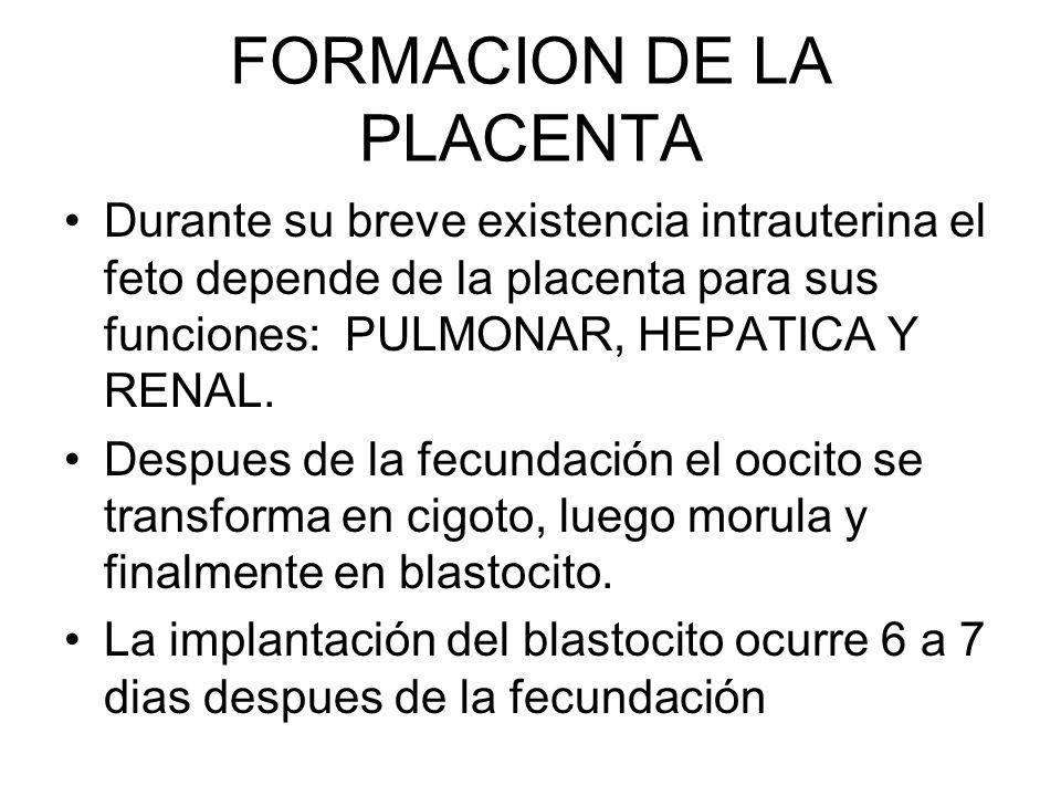 FORMACION DE LA PLACENTA