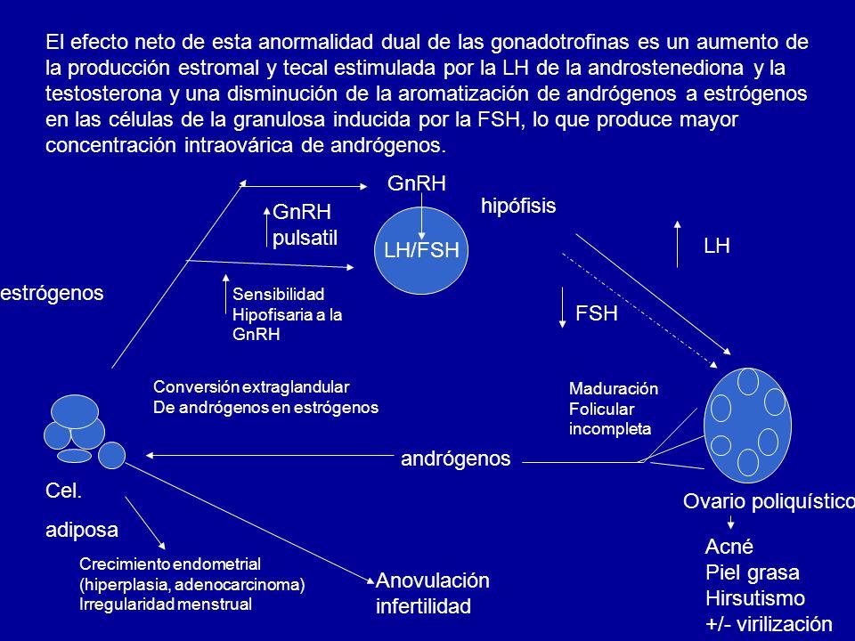 El efecto neto de esta anormalidad dual de las gonadotrofinas es un aumento de la producción estromal y tecal estimulada por la LH de la androstenediona y la testosterona y una disminución de la aromatización de andrógenos a estrógenos en las células de la granulosa inducida por la FSH, lo que produce mayor concentración intraovárica de andrógenos.