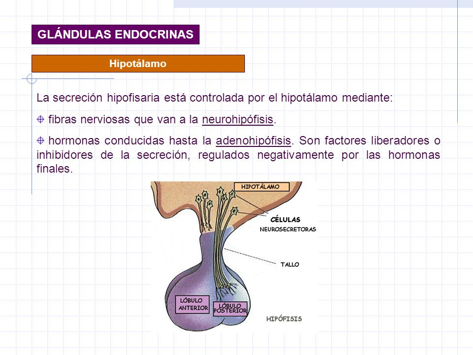 La secreción hipofisaria está controlada por el hipotálamo mediante: