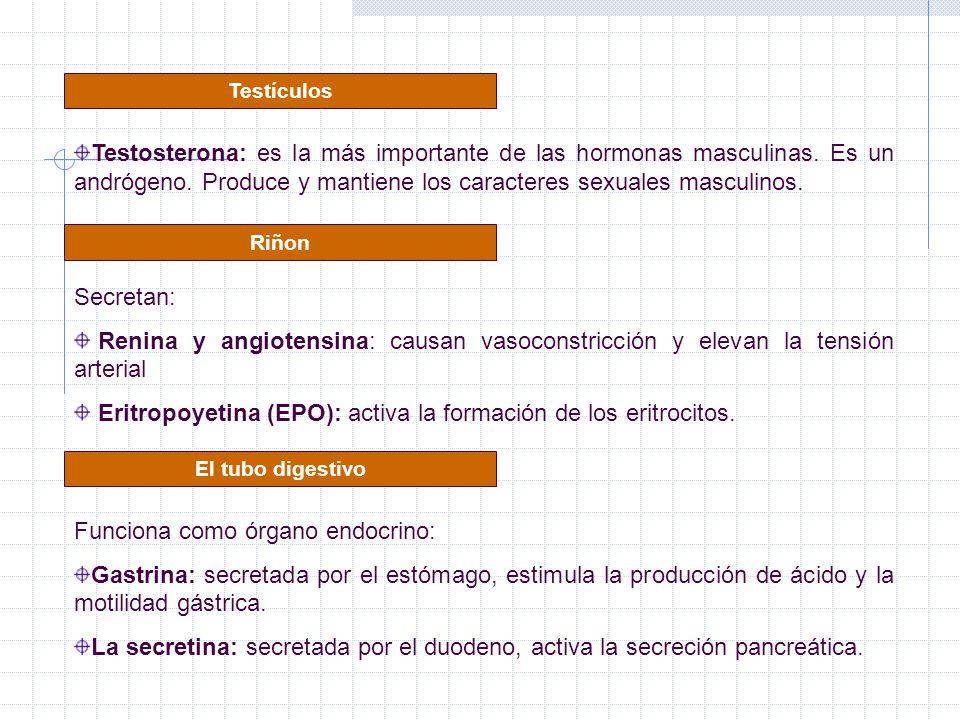 Eritropoyetina (EPO): activa la formación de los eritrocitos.