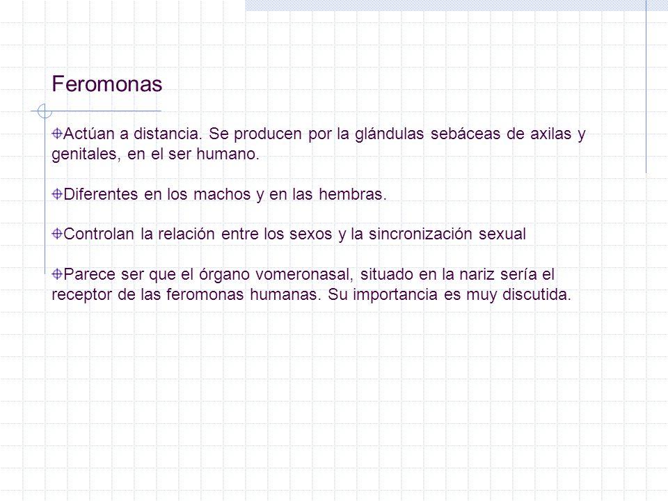 Feromonas Actúan a distancia. Se producen por la glándulas sebáceas de axilas y genitales, en el ser humano.