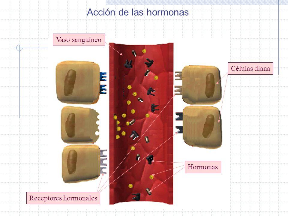 Receptores hormonales