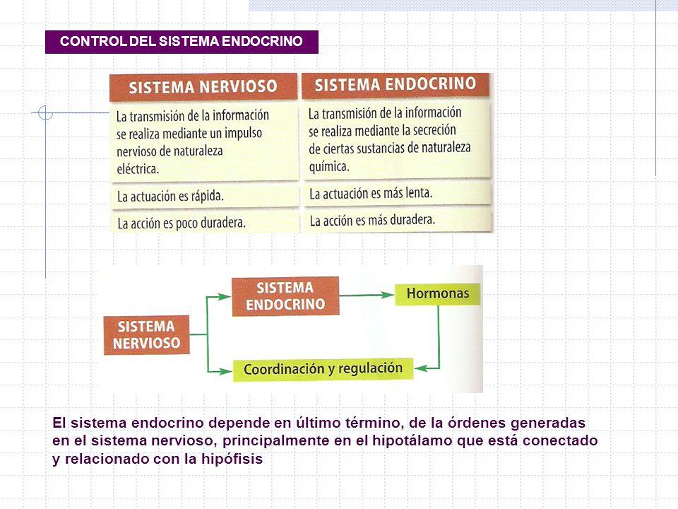 CONTROL DEL SISTEMA ENDOCRINO