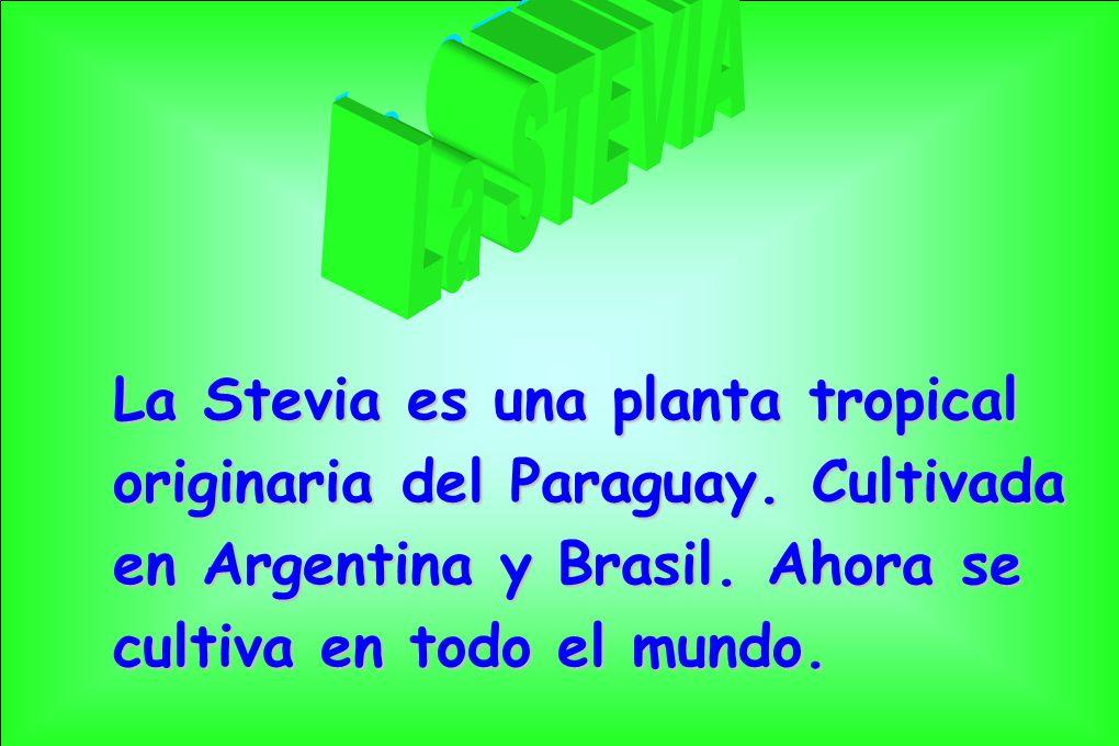 La Stevia es una planta tropical originaria del Paraguay. Cultivada