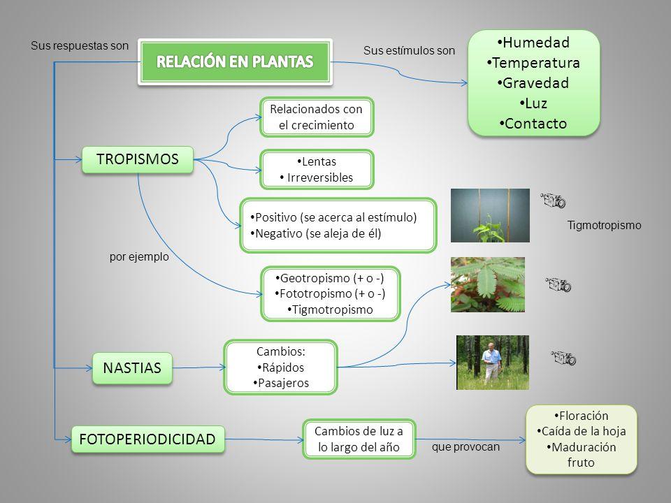 Humedad Temperatura RELACIÓN EN PLANTAS Gravedad Luz Contacto