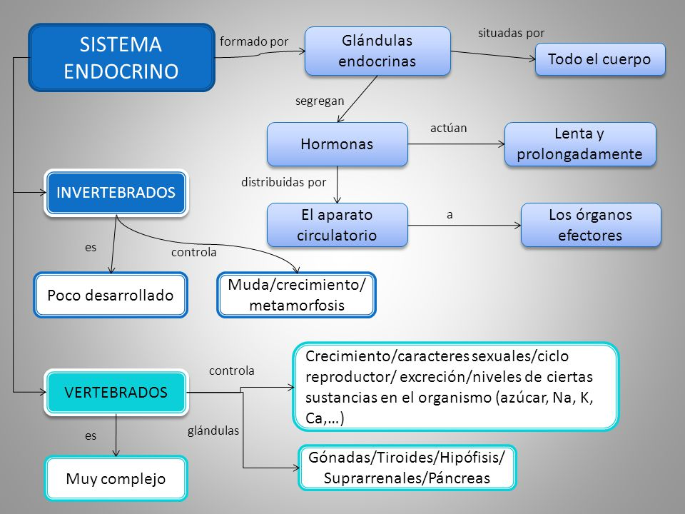 SISTEMA ENDOCRINO Glándulas endocrinas Todo el cuerpo Hormonas