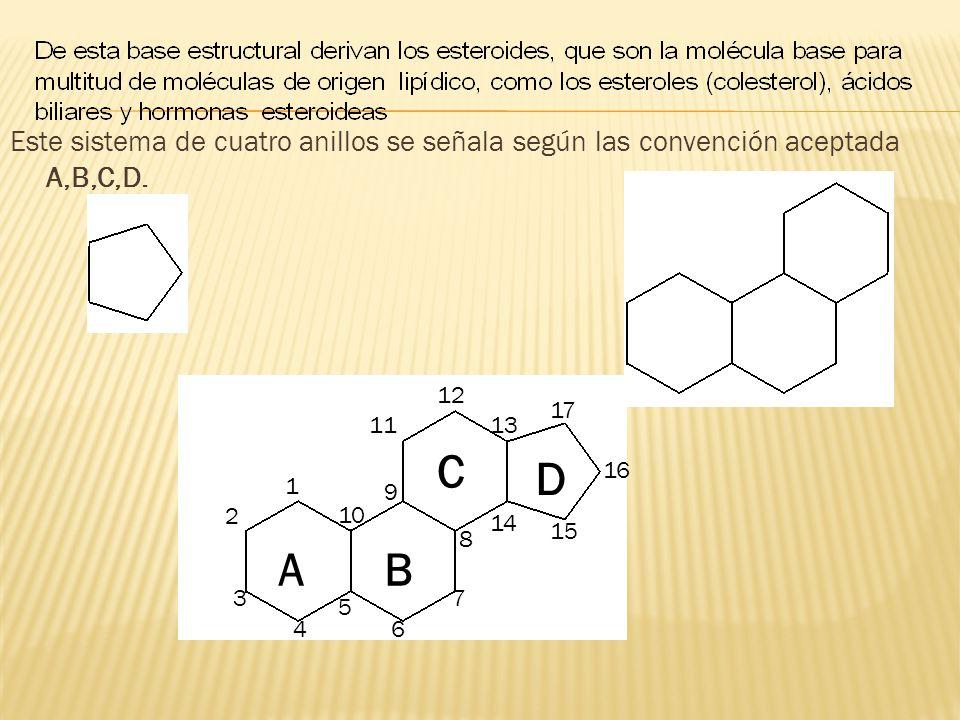 Este sistema de cuatro anillos se señala según las convención aceptada A,B,C,D.