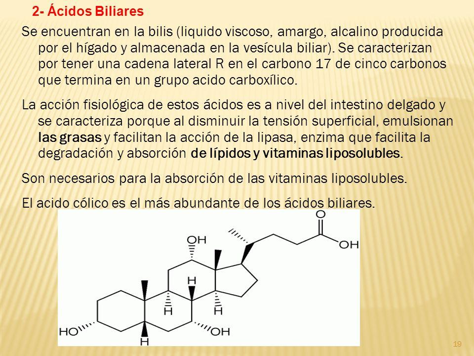 Son necesarios para la absorción de las vitaminas liposolubles.
