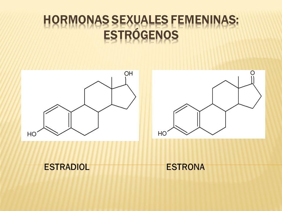 Hormonas sexuales femeninas: estrógenos