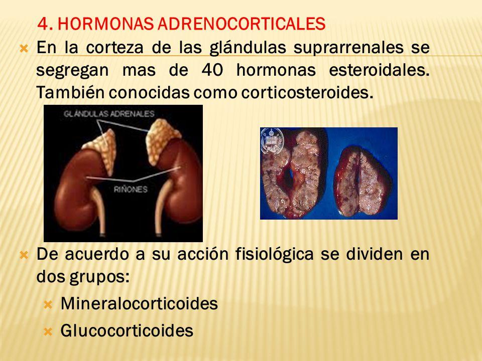4. HORMONAS ADRENOCORTICALES