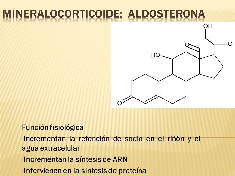 MINERALOCORTICOIDE: Aldosterona