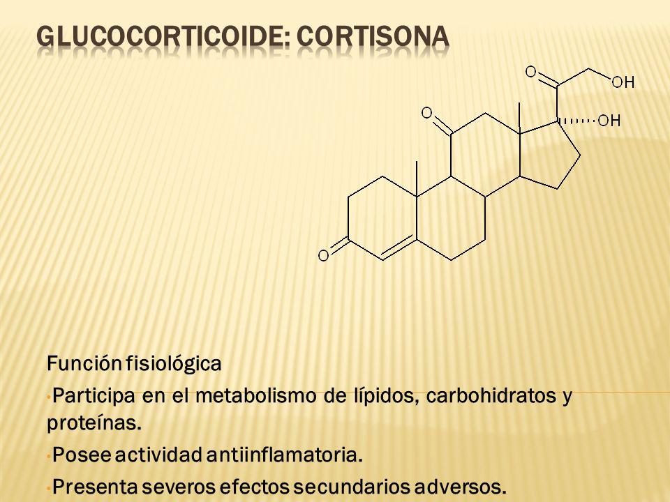 GLUCOCORTICOIDE: Cortisona