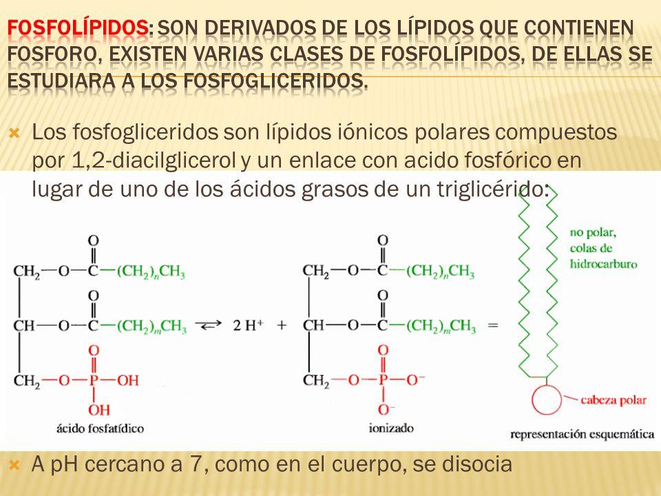 A pH cercano a 7, como en el cuerpo, se disocia