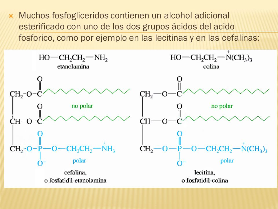 Muchos fosfogliceridos contienen un alcohol adicional esterificado con uno de los dos grupos ácidos del acido fosforico, como por ejemplo en las lecitinas y en las cefalinas: