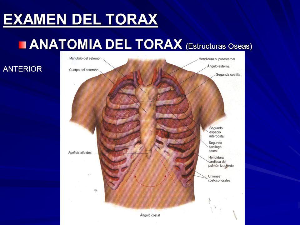 EXAMEN DEL TORAX ANATOMIA DEL TORAX (Estructuras Oseas) ANTERIOR