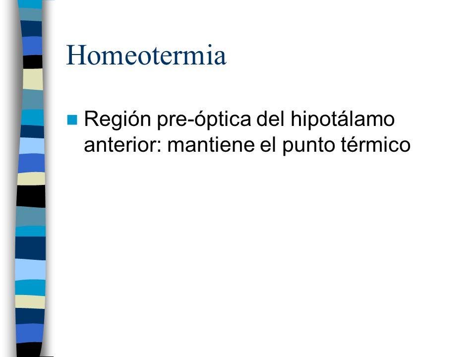 Homeotermia Región pre-óptica del hipotálamo anterior: mantiene el punto térmico