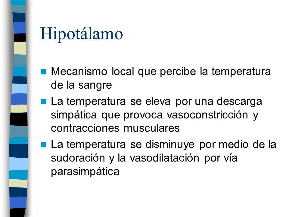 Hipotálamo Mecanismo local que percibe la temperatura de la sangre
