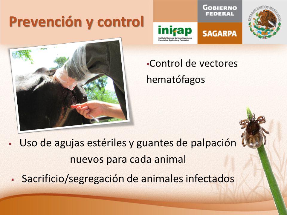 Prevención y control Control de vectores hematófagos. Uso de agujas estériles y guantes de palpación nuevos para cada animal.