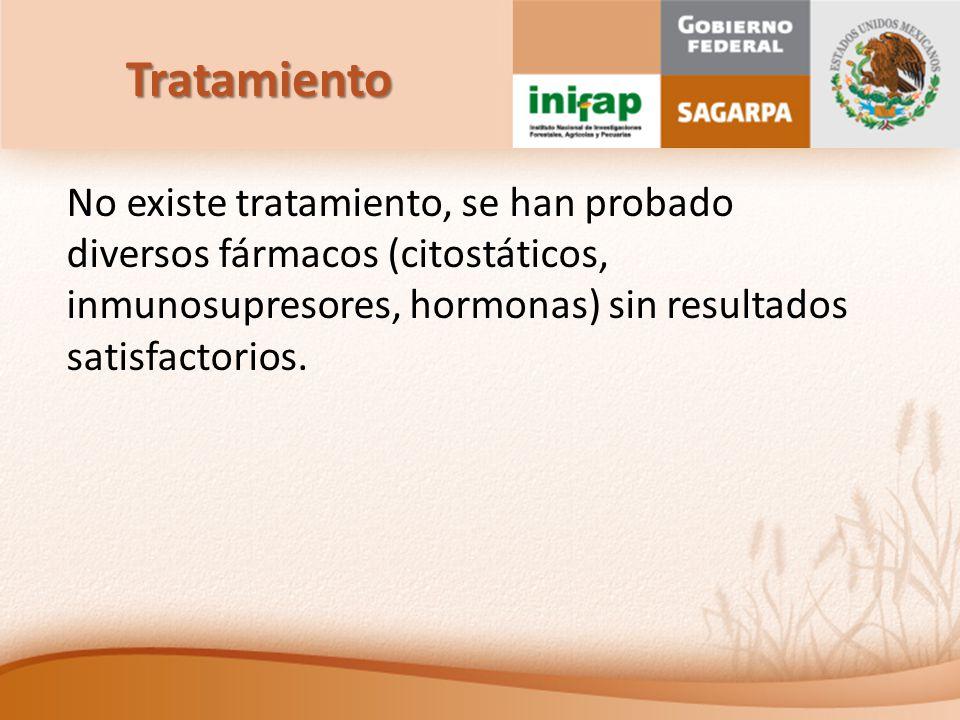 Tratamiento No existe tratamiento, se han probado diversos fármacos (citostáticos, inmunosupresores, hormonas) sin resultados satisfactorios.