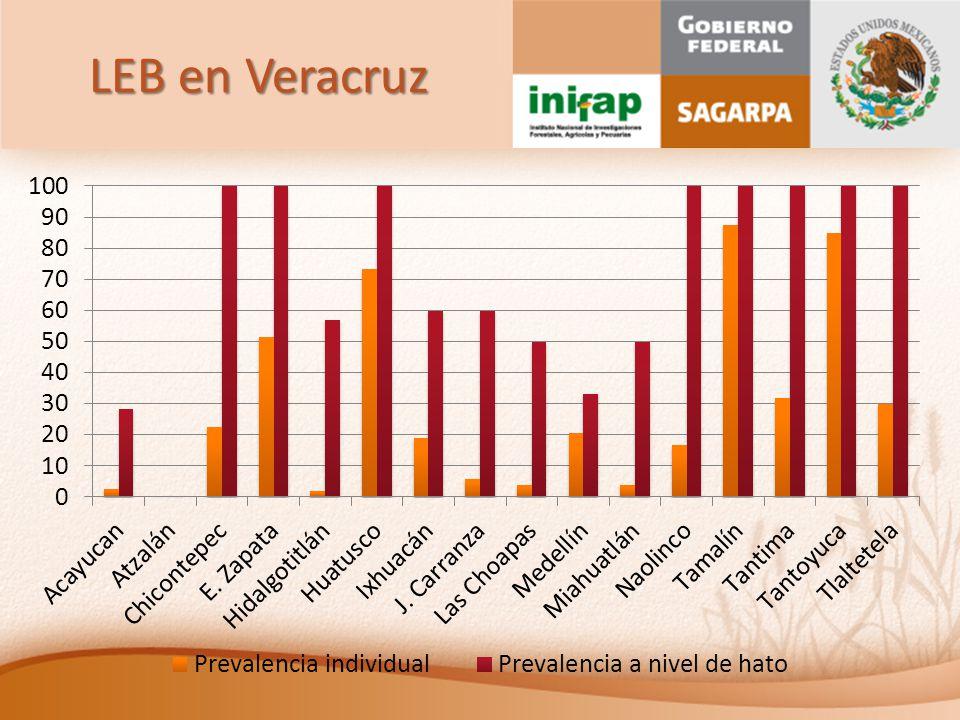 LEB en Veracruz