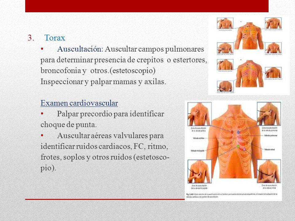 Torax Auscultación: Auscultar campos pulmonares