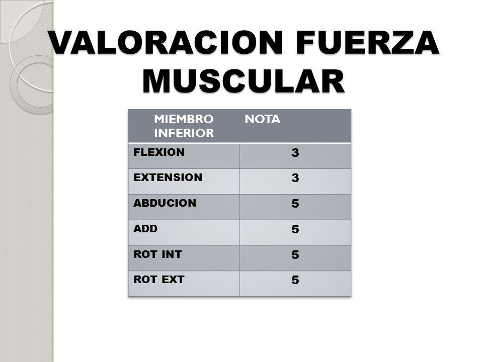 VALORACION FUERZA MUSCULAR