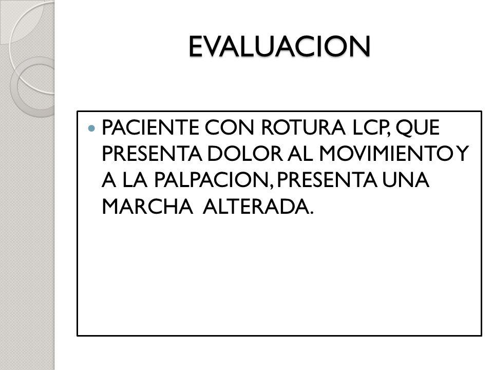EVALUACION PACIENTE CON ROTURA LCP, QUE PRESENTA DOLOR AL MOVIMIENTO Y A LA PALPACION, PRESENTA UNA MARCHA ALTERADA.