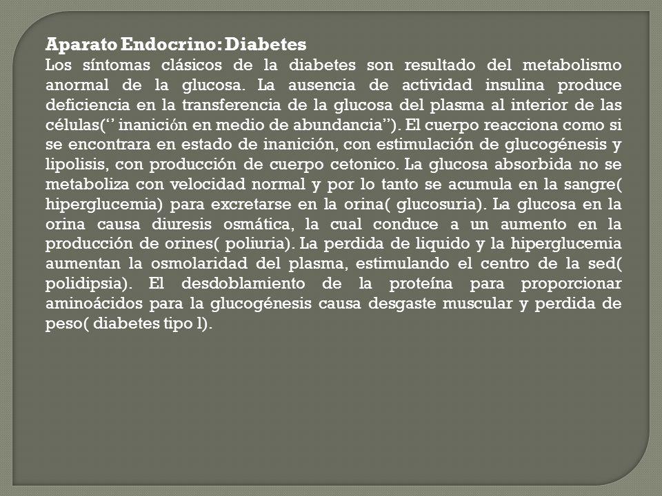 Aparato Endocrino: Diabetes