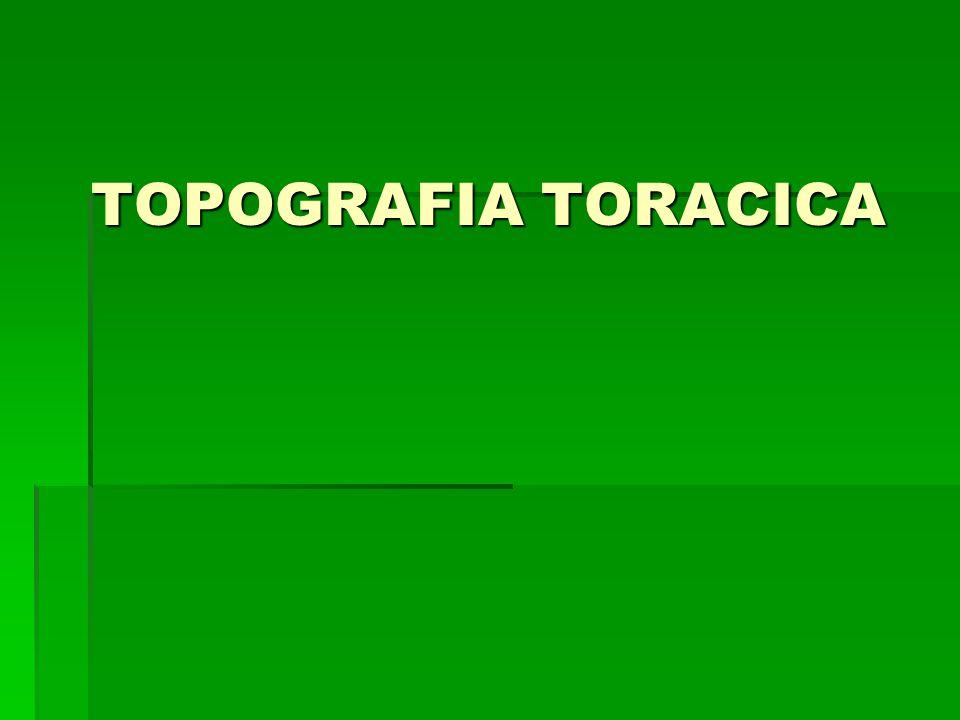 TOPOGRAFIA TORACICA