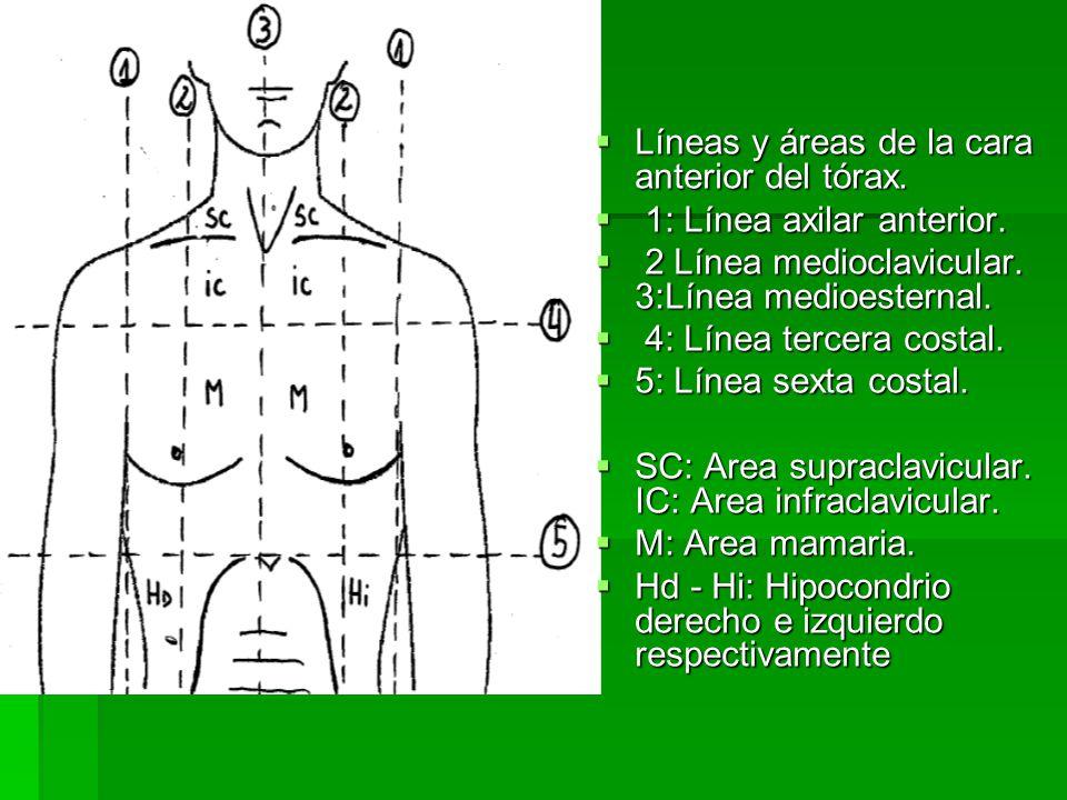Líneas y áreas de la cara anterior del tórax.