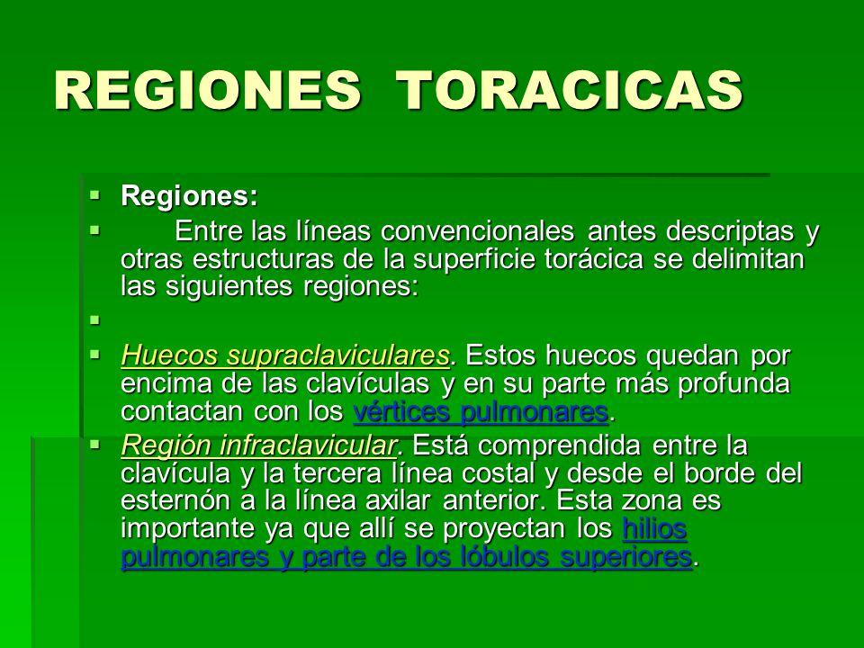 REGIONES TORACICAS Regiones: