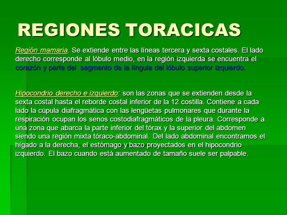 REGIONES TORACICAS