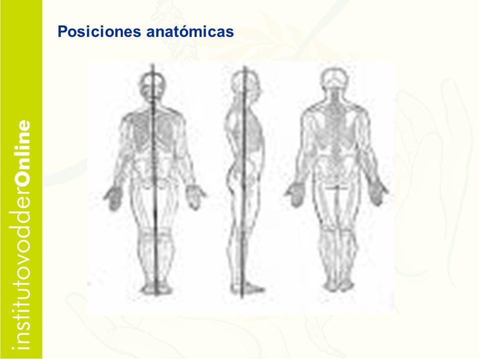 Posiciones anatómicas