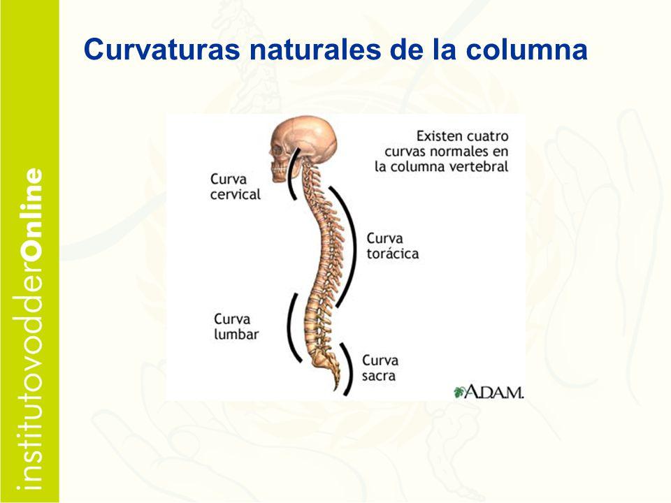 Curvaturas naturales de la columna